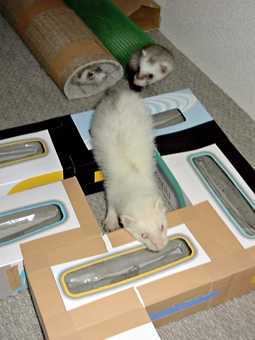 Ferrets-f.jpg