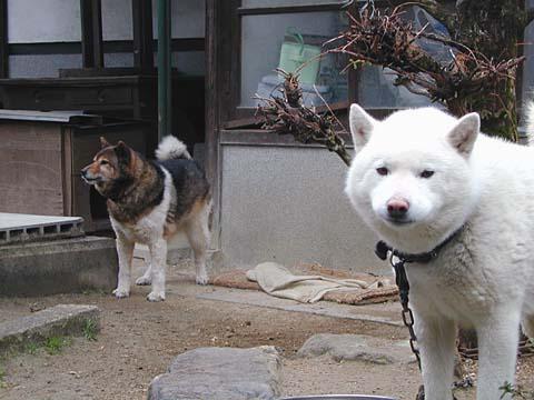 Ryu-a.jpg
